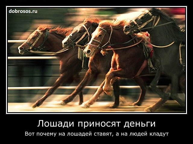 Лошади приносят деньги: Вот почему на лошадей ставят, а на людей кладут