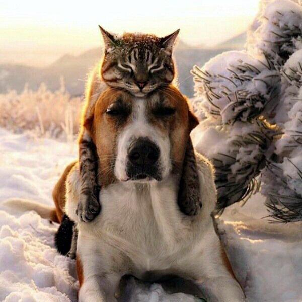 Невероятная настоящая дружба животные