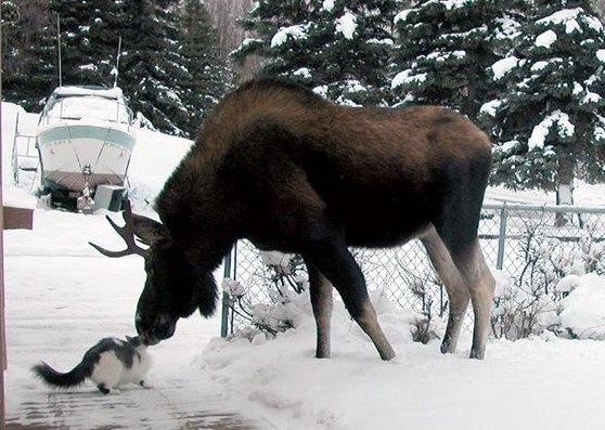 взаимное притяжение, животные