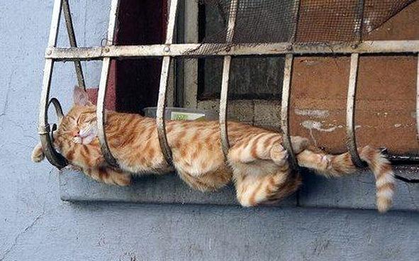 ему все равно, где сладко спать...