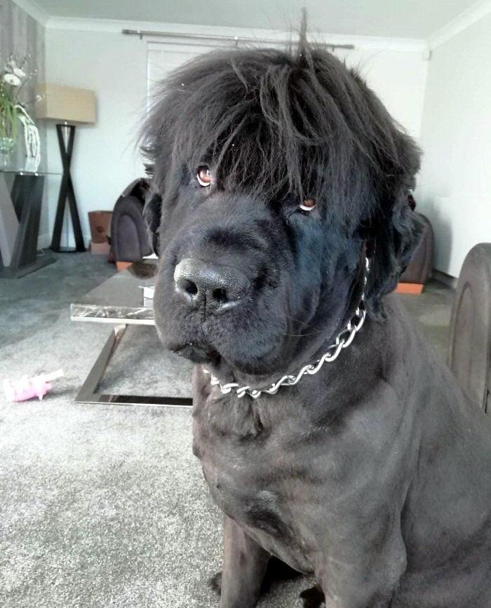 ньюфаундленд фото собака ньюфаундленд щенки фото