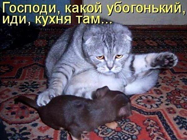 новые фото приколы юмор животный прикол