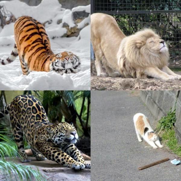 новые фото приколы юмор все кошки делают так