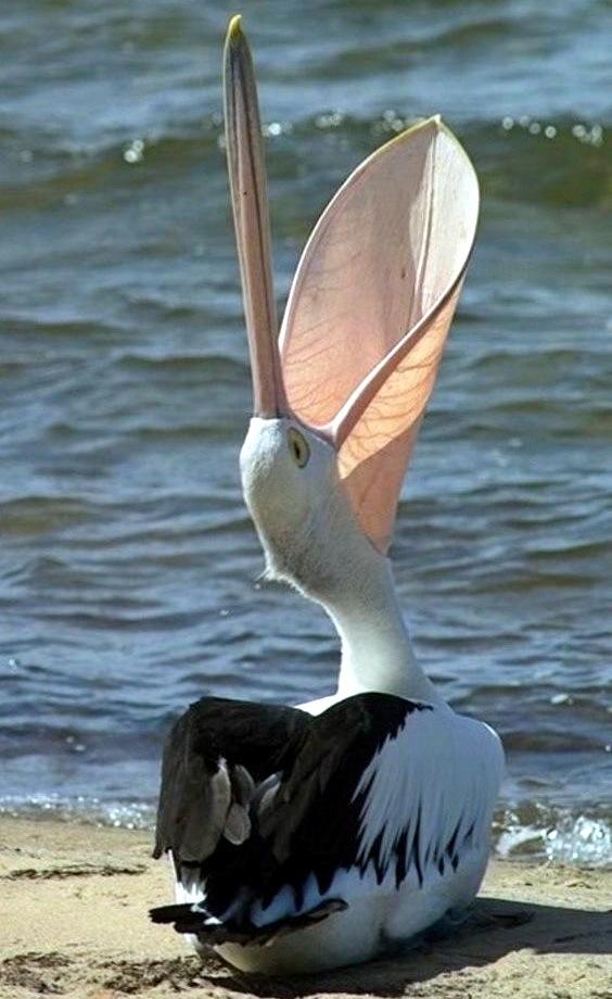 смешные забавные птицы фото