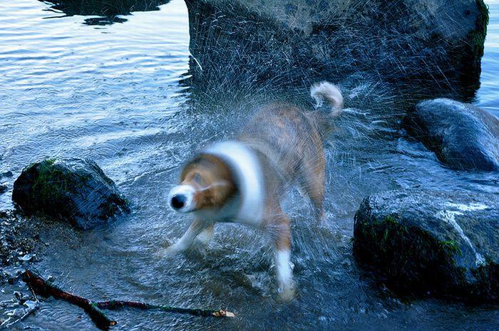 собака отряхивается от воды брызги во все стороны смешные морды собак