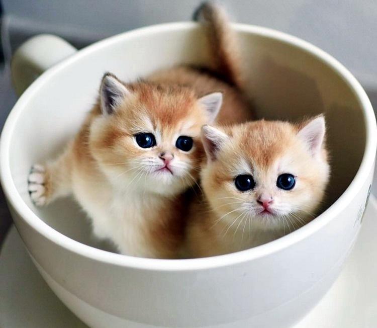 забавные кошки собаки фото приколы