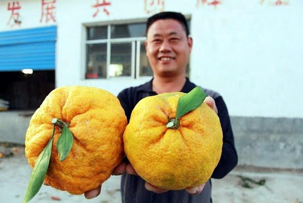 Гигантские овощи и фрукты (13 фото) Фотографии, гигантских, овощей, фруктов