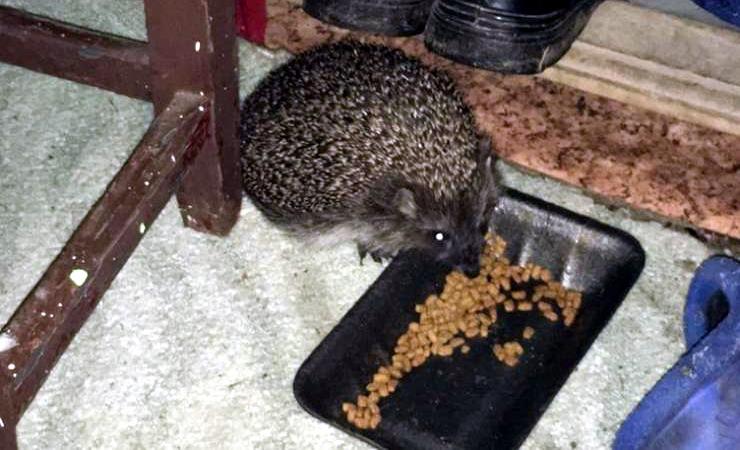 незваные гости фото животные не званные гости